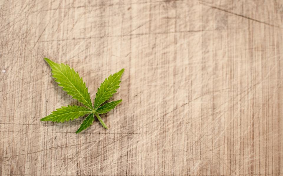 Notable Marijuana Users