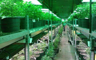 A Closer Look at the Global Marijuana Trade